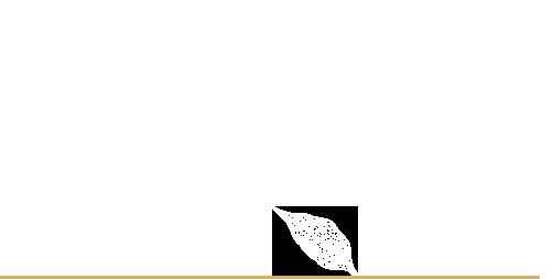 Ricerca Ginseng Naturando